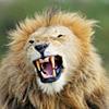 Show your latest WPI..... - last post by lionhrt