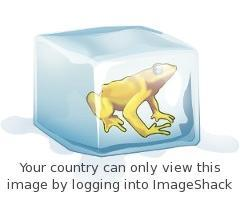 Attached Image: blocked_frog.jpg